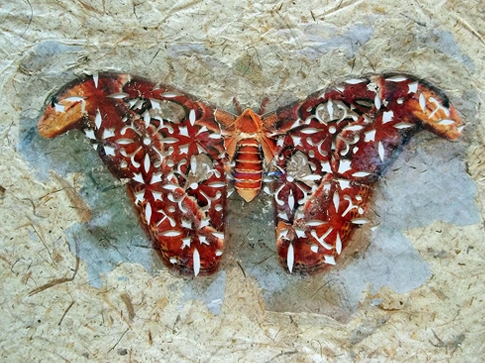 Elise Wehle moth wings PaperArtView